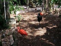 Pássaros no jardim zoológico de Tampa Fotos de Stock