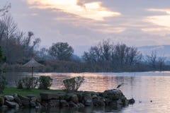Pássaros no lago no por do sol Fotografia de Stock Royalty Free