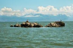 Pássaros no lago Skadar Imagem de Stock Royalty Free