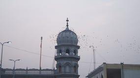 Pássaros no lugar religioso Imagem de Stock