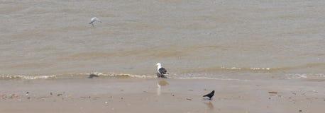 Pássaros no mar Fotos de Stock