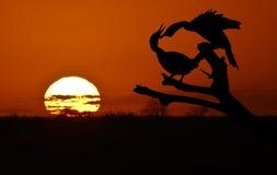 Pássaros no pôr-do-sol Fotos de Stock Royalty Free