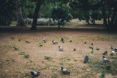 Pássaros no parque de Ciutadella Imagem de Stock