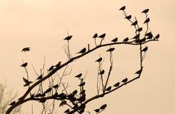 Pássaros no ramo Foto de Stock Royalty Free