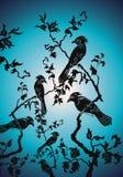 Pássaros no stoppin nocturnal Foto de Stock