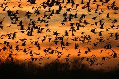 Pássaros no vôo fotografia de stock
