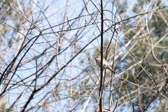 Pássaros nos animais selvagens Opinião o pássaro bonito que se senta em um ramo sob a paisagem da luz solar Fotos de Stock Royalty Free
