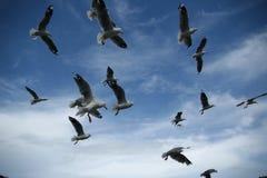 Pássaros pairando Imagem de Stock Royalty Free