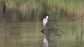 pássaros Parque regional do beira-rio, região vinícola de Sonoma, Califórnia vídeos de arquivo