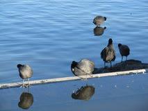 Pássaros pela água Fotografia de Stock