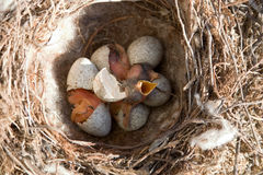 Pássaros pequenos Imagem de Stock Royalty Free