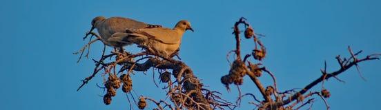 Pássaros pequenos em ramos de árvore Imagem de Stock Royalty Free