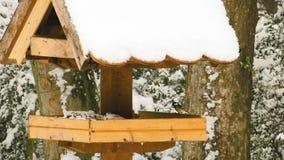 Pássaros pequenos no alimentador no tempo de inverno filme