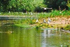 Pássaros perto da água com plantas Foto de Stock Royalty Free