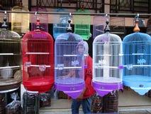 Pássaros prendidos Fotos de Stock