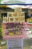 Pássaros prendidos para a venda Fotografia de Stock