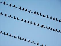 Pássaros pretos em fios elétricos Fotografia de Stock Royalty Free
