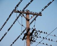 Pássaros pretos em fios elétricos Imagens de Stock