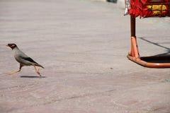 Pássaros prontos para voar no ar Fotografia de Stock