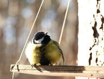 Pássaros que alimentam no inverno Imagens de Stock Royalty Free