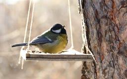 Pássaros que alimentam no inverno Fotos de Stock Royalty Free