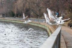 Pássaros que assentam em uma cerca pelo rio Imagem de Stock