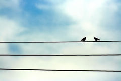 Pássaros que cantam em uma linha elétrica Foto de Stock Royalty Free