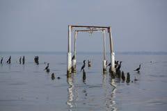 Pássaros que empoleiram-se em colunas concretas, o Lago de Maracaibo, Venezuela Imagens de Stock Royalty Free