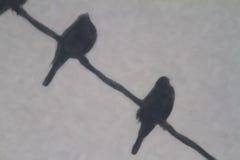 Pássaros que enfrentam longe da ilustração do vento Imagem de Stock