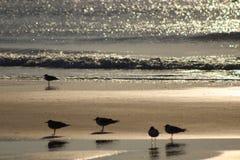 Pássaros que estão no por do sol imagens de stock royalty free