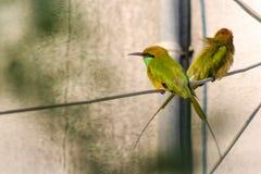 Pássaros que preparam-se imagens de stock