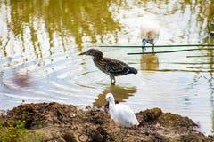 Pássaros que refrigeram pelo lago imagem de stock
