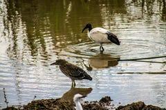 Pássaros que refrigeram pelo lago fotografia de stock