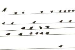 Pássaros que sentam-se em fios fotografia de stock