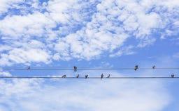 Pássaros que sentam-se em um fio Imagem de Stock Royalty Free