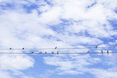 Pássaros que sentam-se em um fio Imagens de Stock