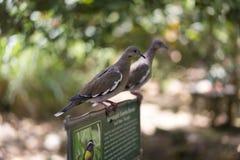 Pássaros que sentam-se em um quadro de mensagens em um parque Imagem de Stock Royalty Free