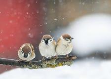 Pássaros que sentam-se em um ramo na neve no parque no inverno Imagens de Stock Royalty Free