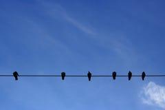 Pássaros que sentam-se na linha elétrica Fotos de Stock Royalty Free