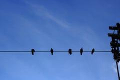 Pássaros que sentam-se na linha elétrica Imagem de Stock Royalty Free