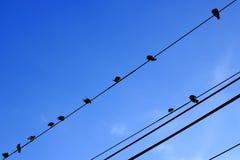 Pássaros que sentam-se na linha elétrica Fotografia de Stock Royalty Free