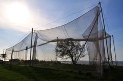 Pássaros que travam redes no cabo do vente Imagens de Stock