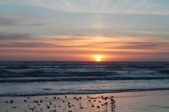 Pássaros que voam abaixo de um por do sol nublado Imagens de Stock