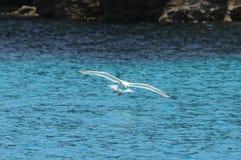 0080031 - Pássaros que voam baixo Foto de Stock Royalty Free