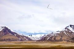 Pássaros que voam entre montanhas na paisagem ártica do verão Fotografia de Stock Royalty Free