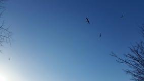 Pássaros que voam no céu Foto de Stock