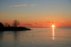 Pássaros que voam no nascer do sol Foto de Stock Royalty Free