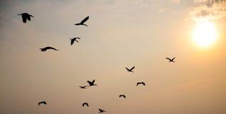 Pássaros que voam o por do sol. Fotos de Stock Royalty Free