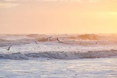 Pássaros que voam sobre o Atlântico no nascer do sol foto de stock royalty free