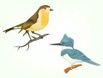 Pássaros realísticos da ilustração isolados no branco Foto de Stock Royalty Free